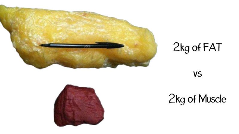 svorio metimo serija riebalų nuostolių spalva