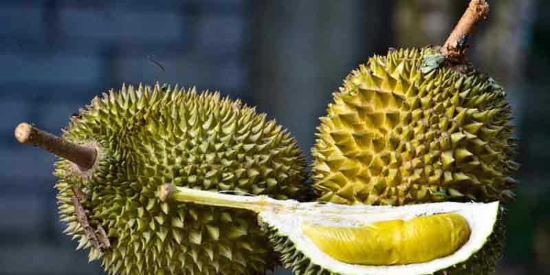 durianai