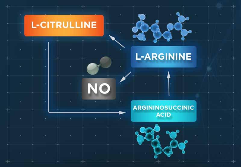 citrulinas ar argininas