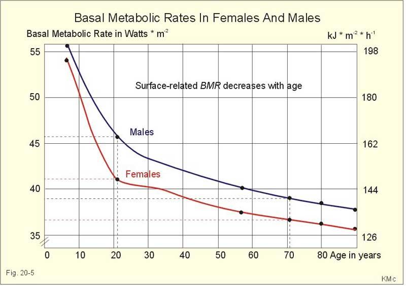 metabolizmo greitis senstant