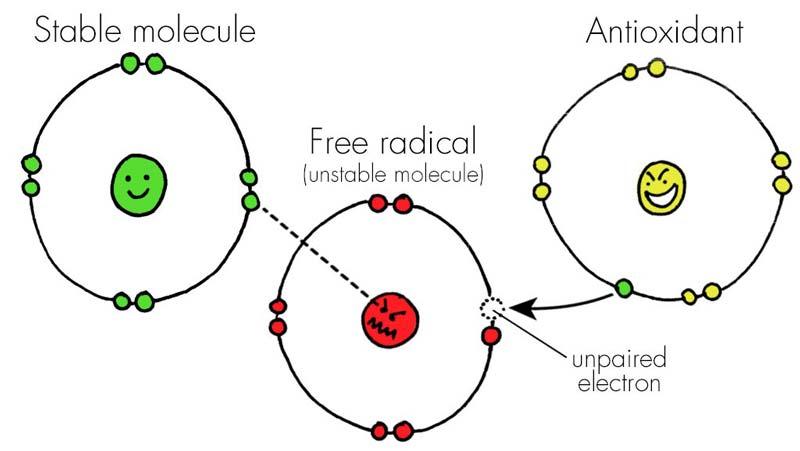 raudonelyje gausu antioksidantu