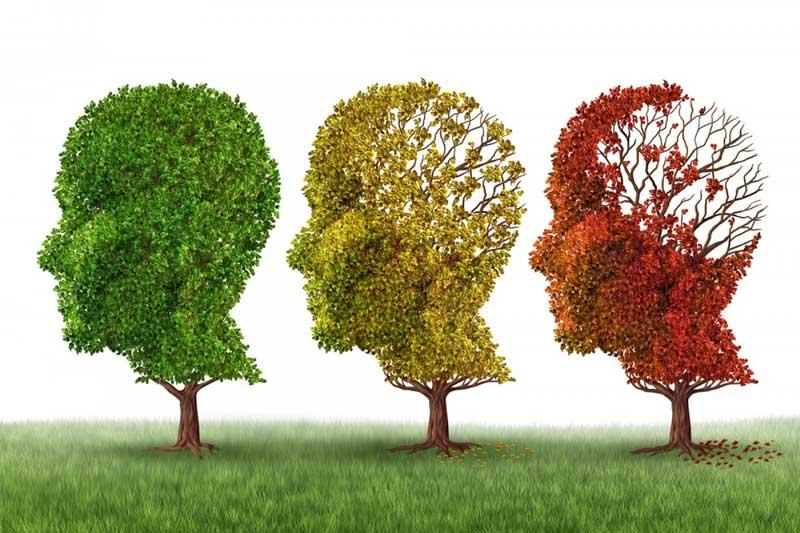 imbieras smegenu funkcija ir alzheimerio liga
