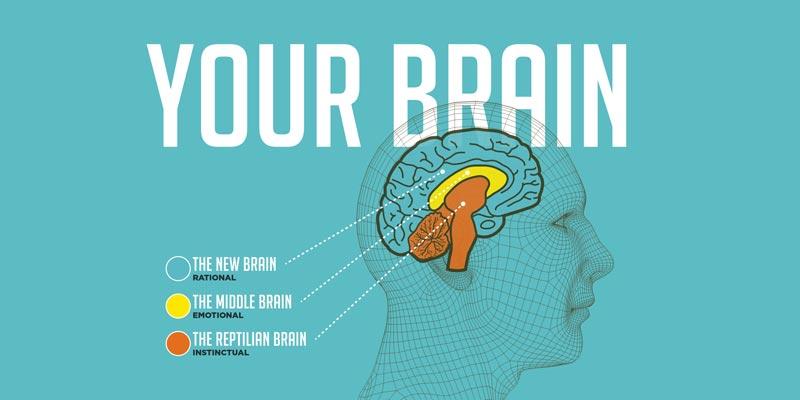 ciberzole smegenims